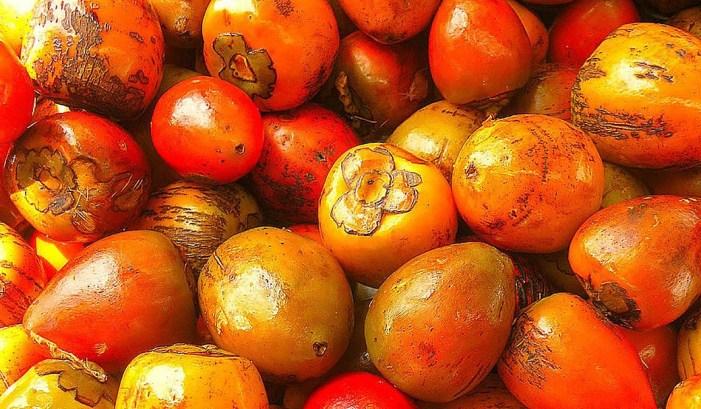 Estudiantes de la Nacional producen cosméticos con aceite de chontaduro
