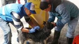 Este sábado jornada de vacunación gratuita de perros y gatos en Mocoa