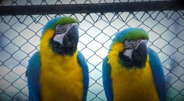 El tráfico ilegal de especies silvestres es una amenaza contra la biodiversidad