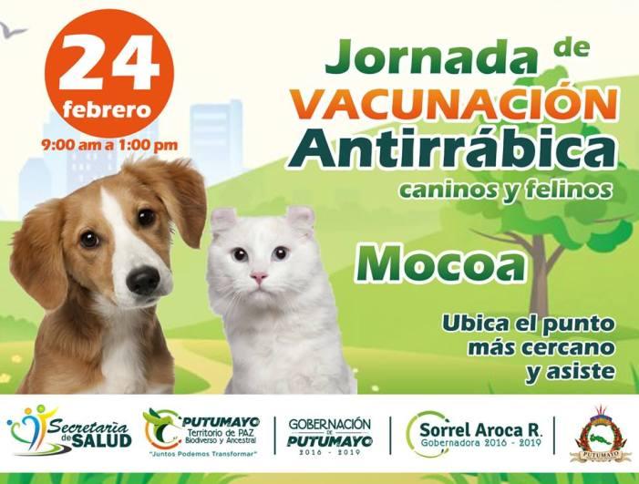 Este sábado hay vacunación antirrábica gratuita para perros y gatos en Mocoa