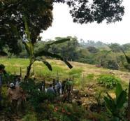 El 90 % de familias cultivadoras de coca no es dueña de tierras: ANT