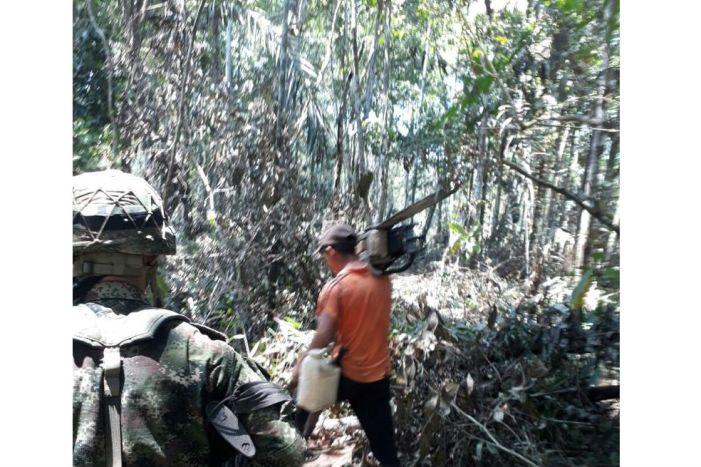 Prohibir las motosierras: una solución a la deforestación