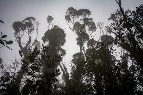 a 2800 msnm en temperaturas de 10°C los árboles alcanzan hasta 15 mt de altura