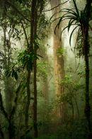 En las partes bajas, en temperaturas de 25°C en promedio, las especies pueden alcanzar los 25 mt