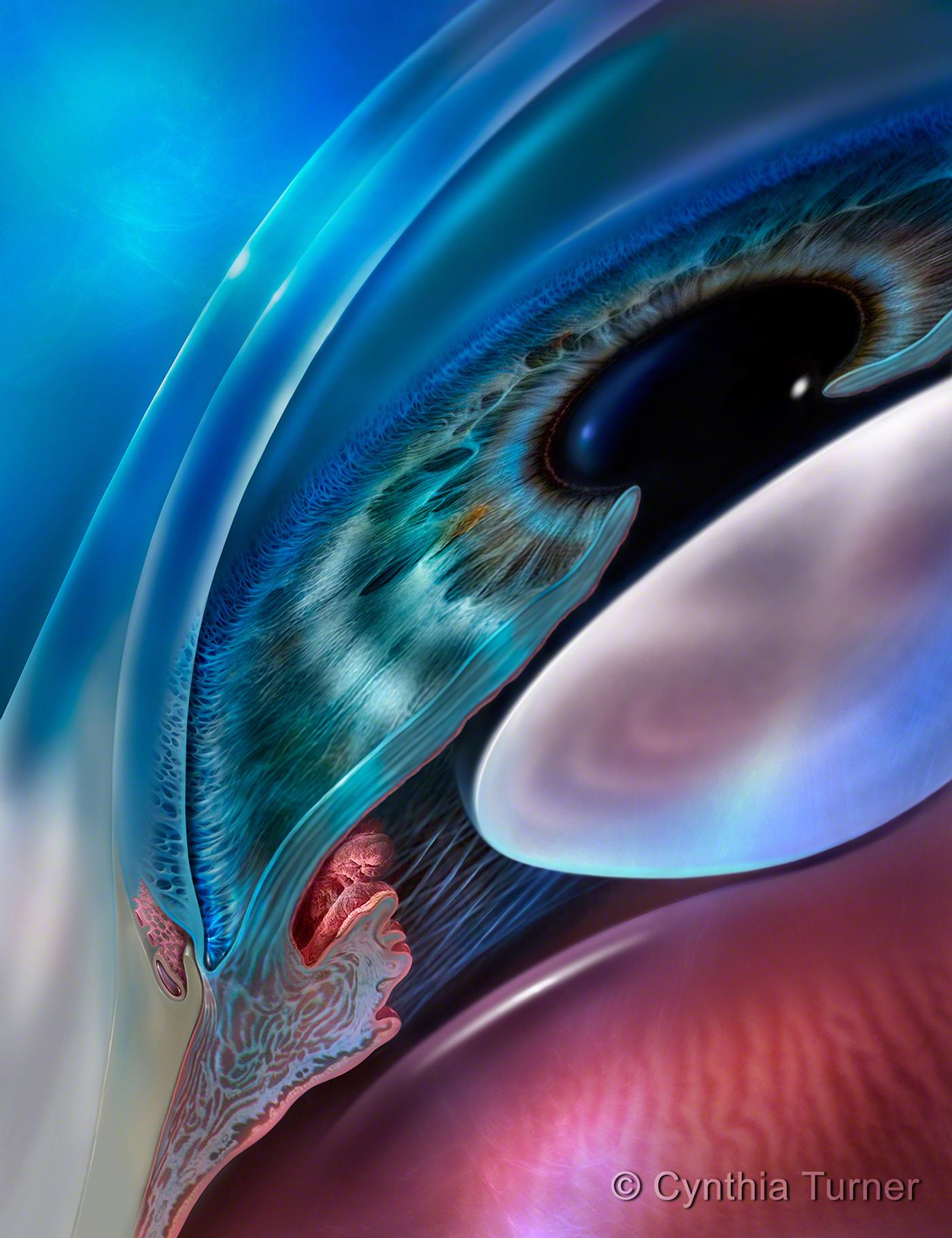 CYNTHIA TURNER   MEDICAL ART on Behance
