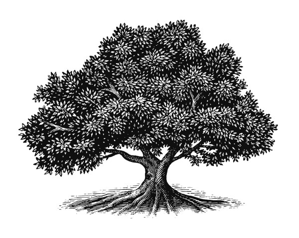 Tree Illustration Collection Steven Noble Behance