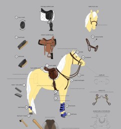 or prepare a horse and equipment for riding i chose to put an emphasis on illustration for this project so each item on the diagram is a hand drawn  [ 1400 x 1812 Pixel ]