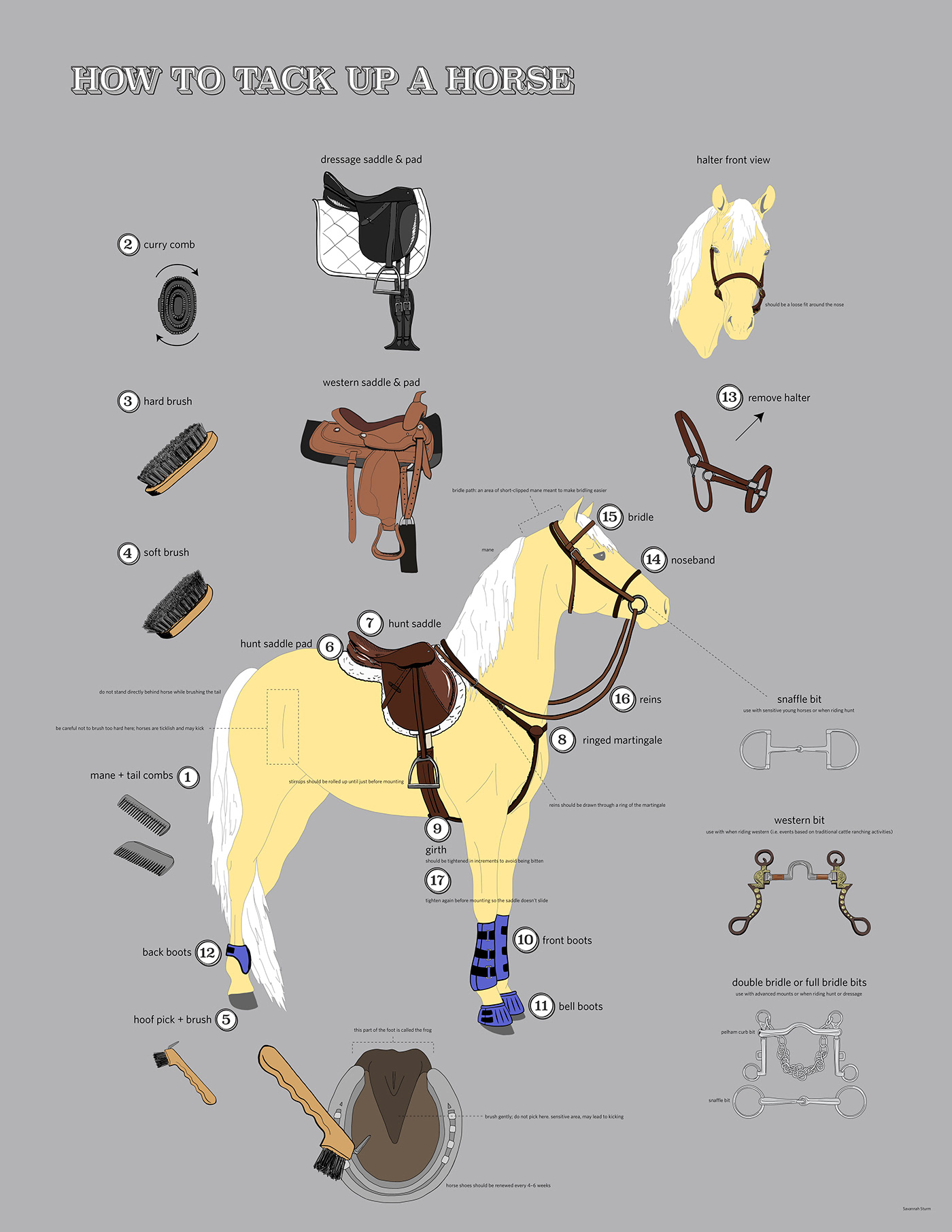 hight resolution of  or prepare a horse and equipment for riding i chose to put an emphasis on illustration for this project so each item on the diagram is a hand drawn