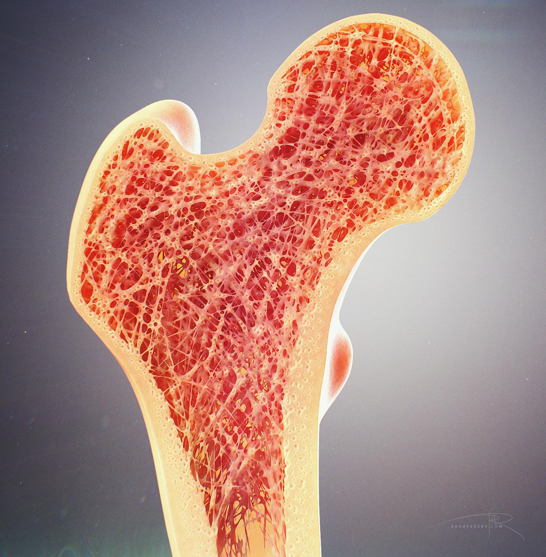 Bone Cross Section For Radius Digital Science On Behance