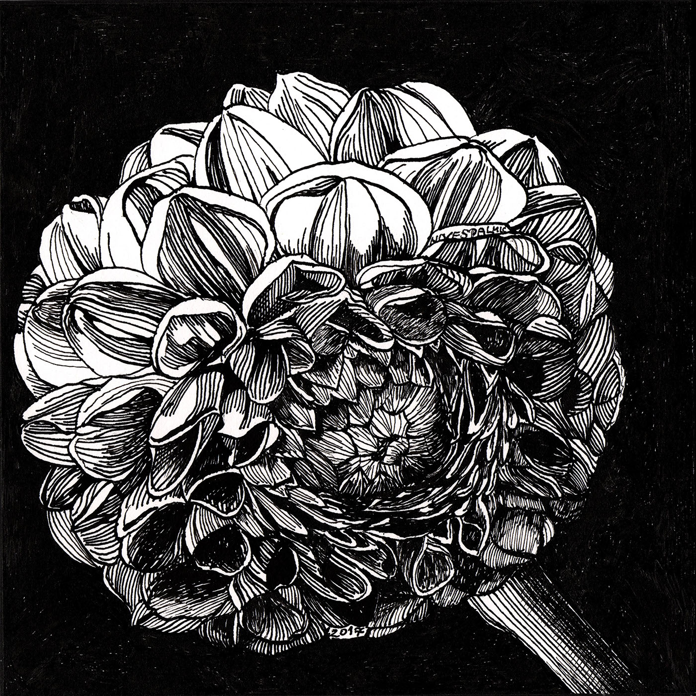 Small Beauties Pen And Ink Drawing On Behance