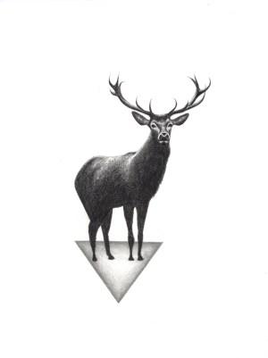 deer drawing simple behance