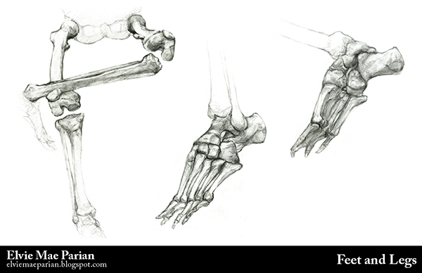 2013 Anatomy Portfolio on SVA Portfolios