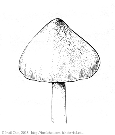 Fungi Morphology : Bulbous, Conic on Behance