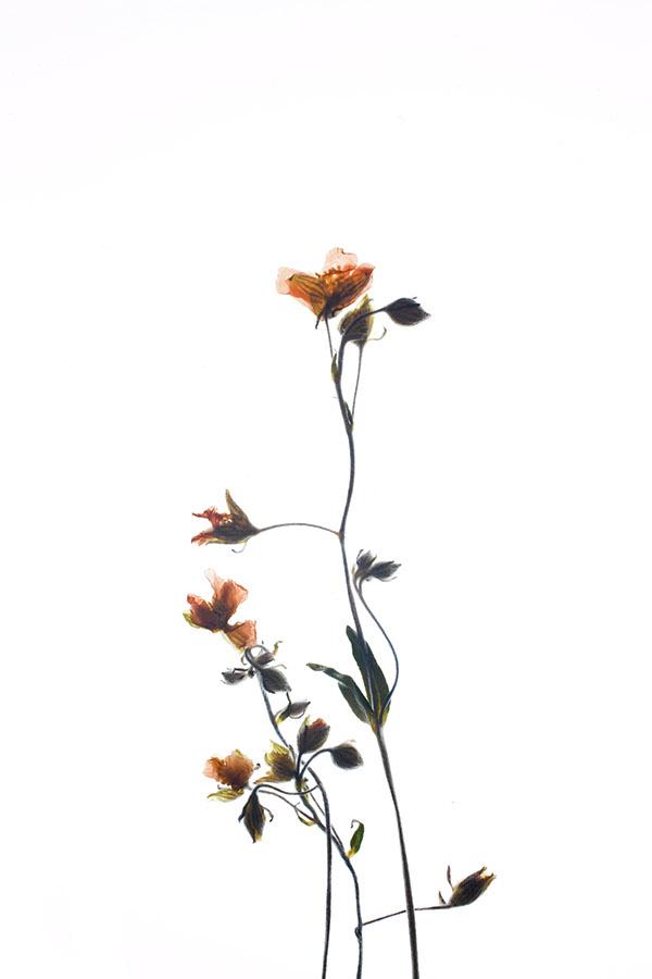 Bloom on Behance