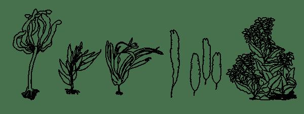 Aquarium Line Drawings on SAIC Portfolios