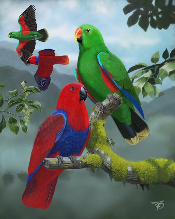 Eclectus Parrot Pair on Behance