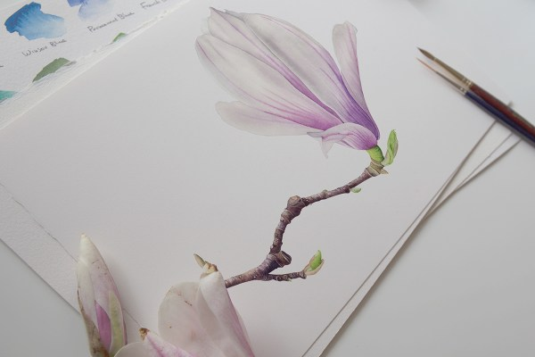 Magnolia Watercolor Illustration Behance