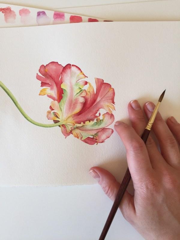 Parrot Tulip Watercolor Illustration Behance