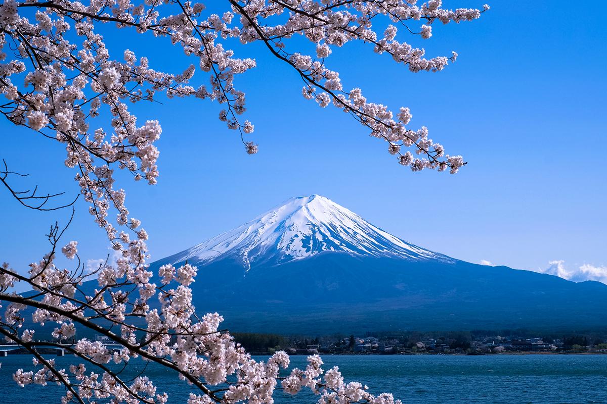 Sakura and Fuji on Behance