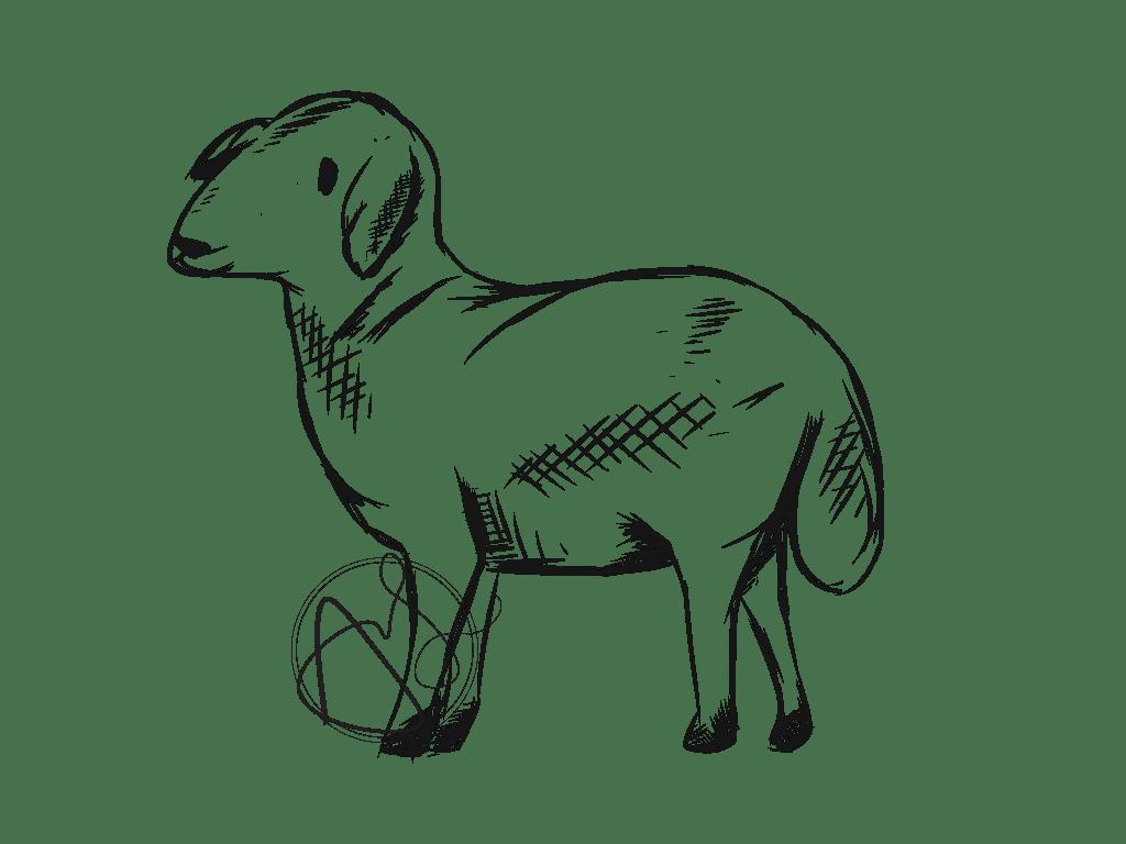 Livestock Sketches on Behance