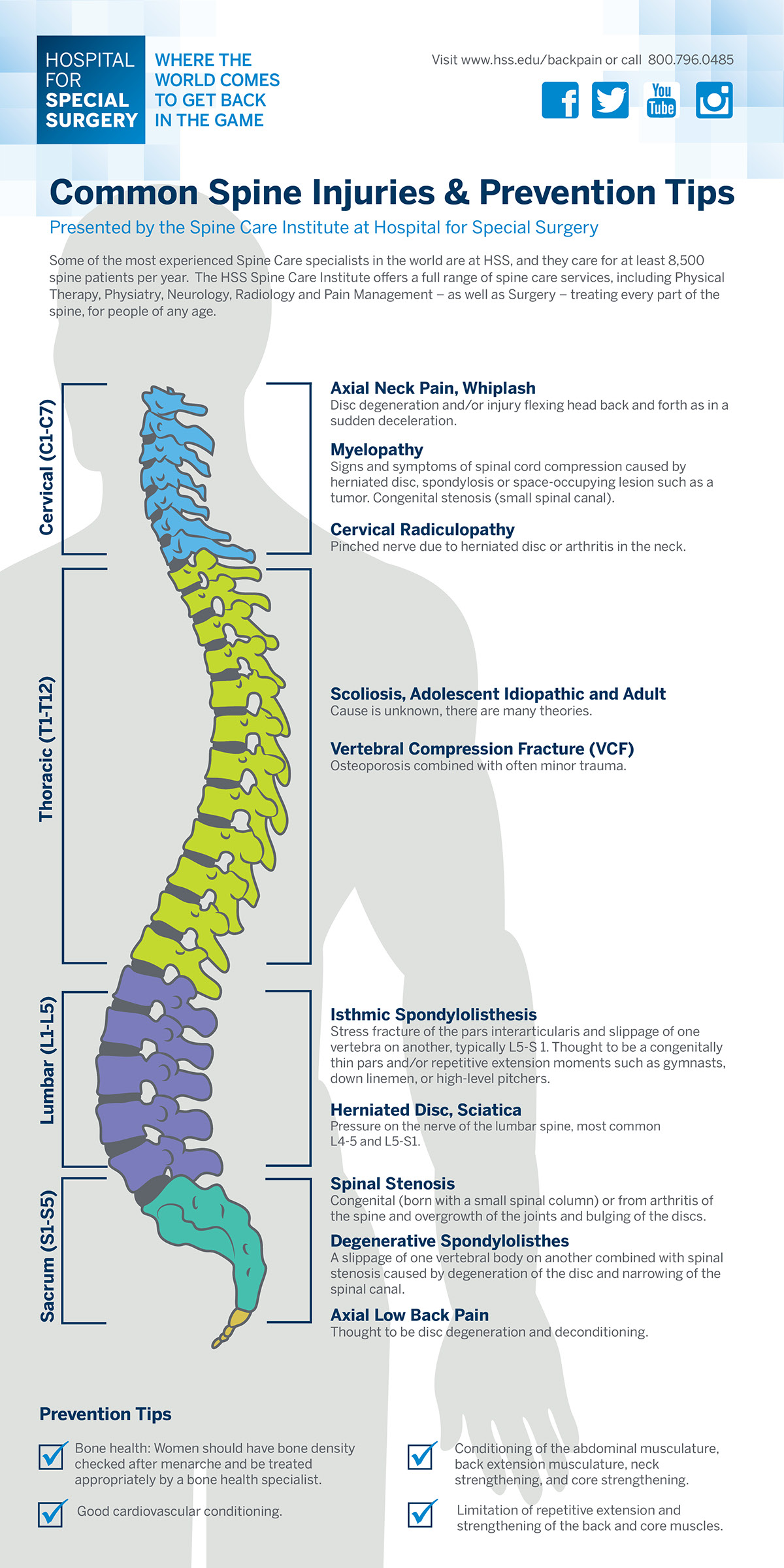 Spine Injury Infographic on Behance
