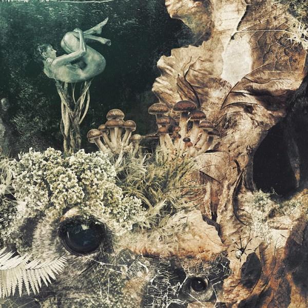 Forest Lake Dreamer Dark Owl Nature Surrealism Behance