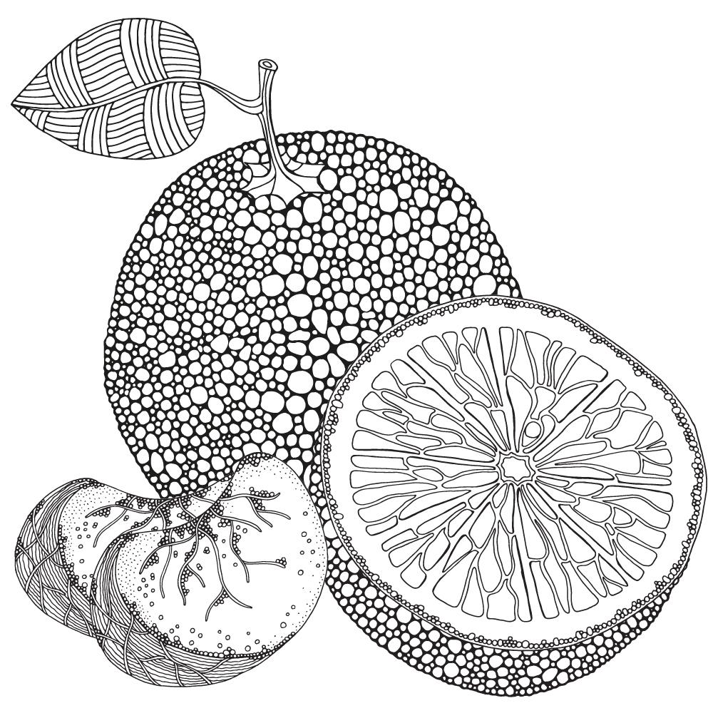 Zentangle fruit. Adult coloring book. on Behance