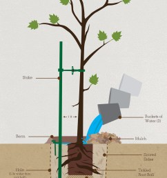 how tree grow diagram [ 1200 x 2073 Pixel ]