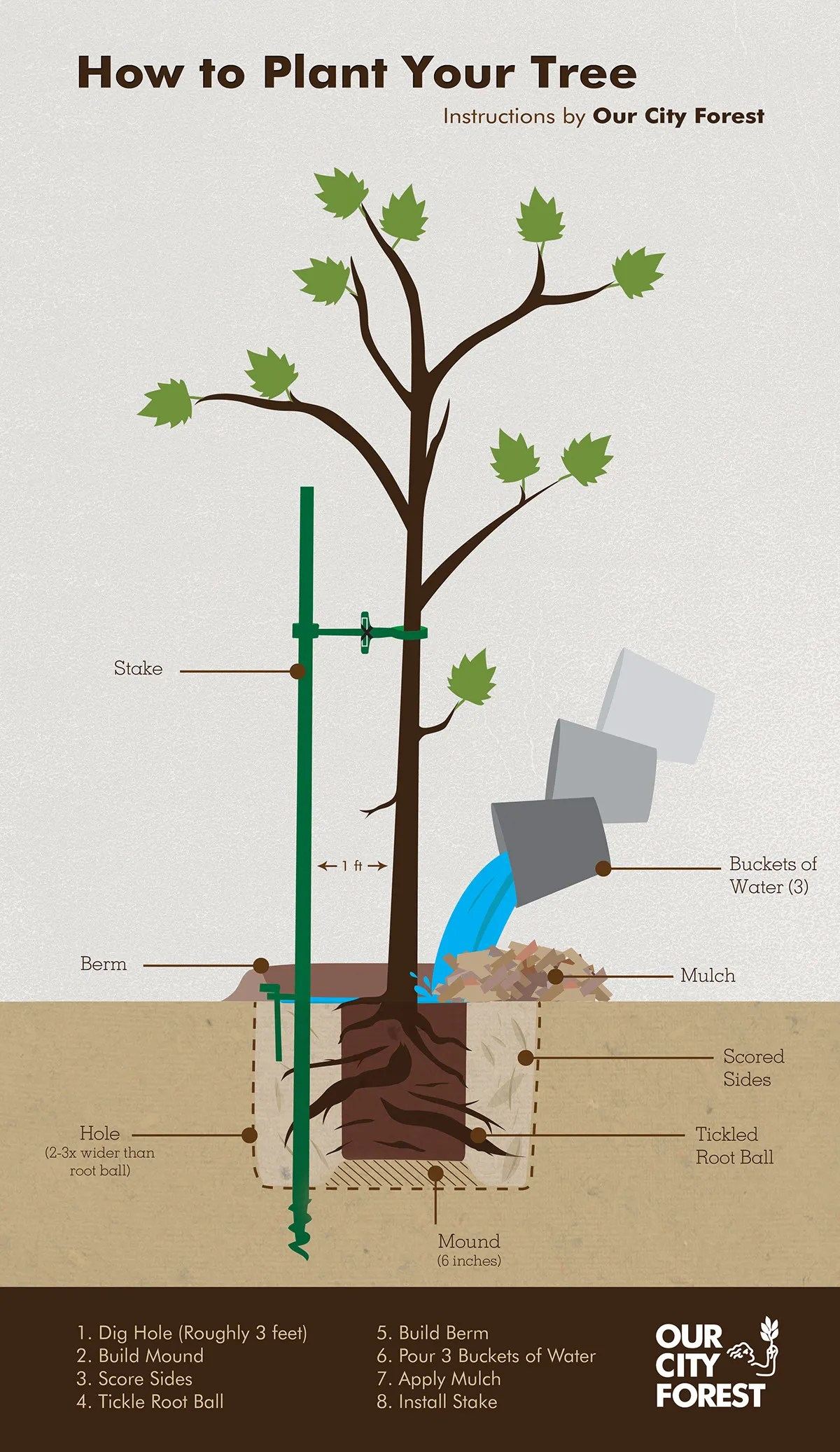 hight resolution of how tree grow diagram