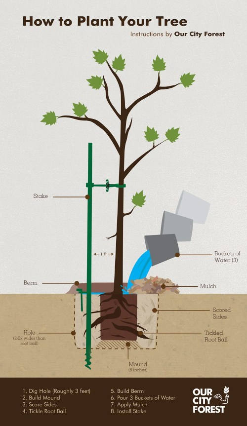 small resolution of how tree grow diagram
