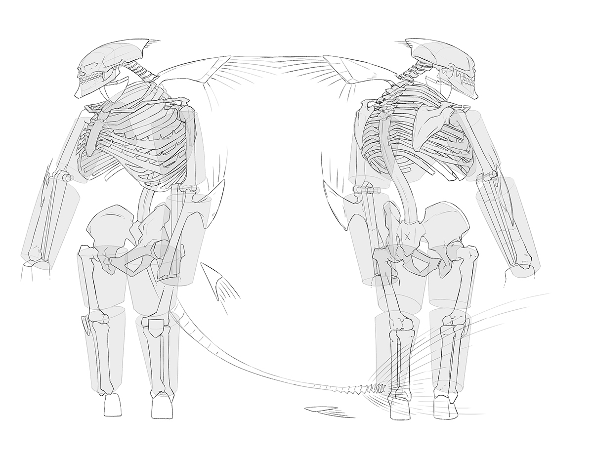 shark skeleton diagram vdo tachograph wiring anatomical man on scad portfolios