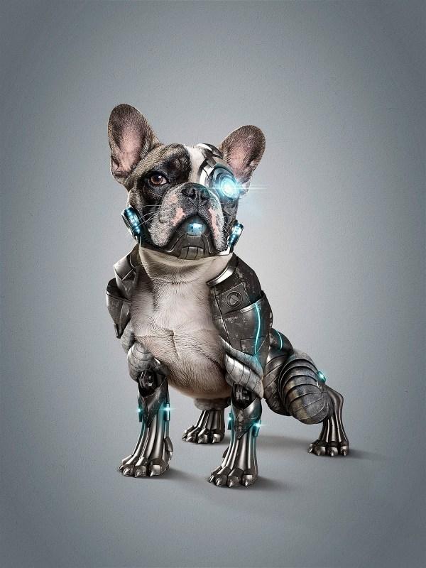 Cyber Dog L Studionuts Behance