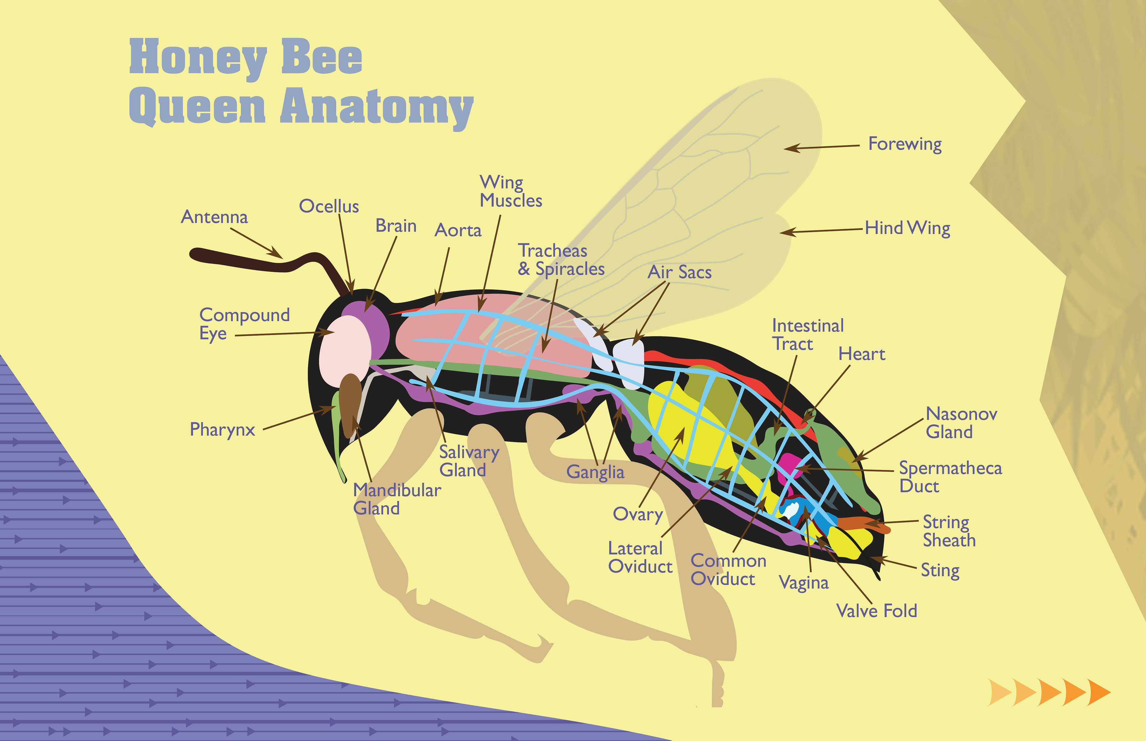 diagram of a queen bee trane weathertron heat pump thermostat wiring anatomy related keywords long tail