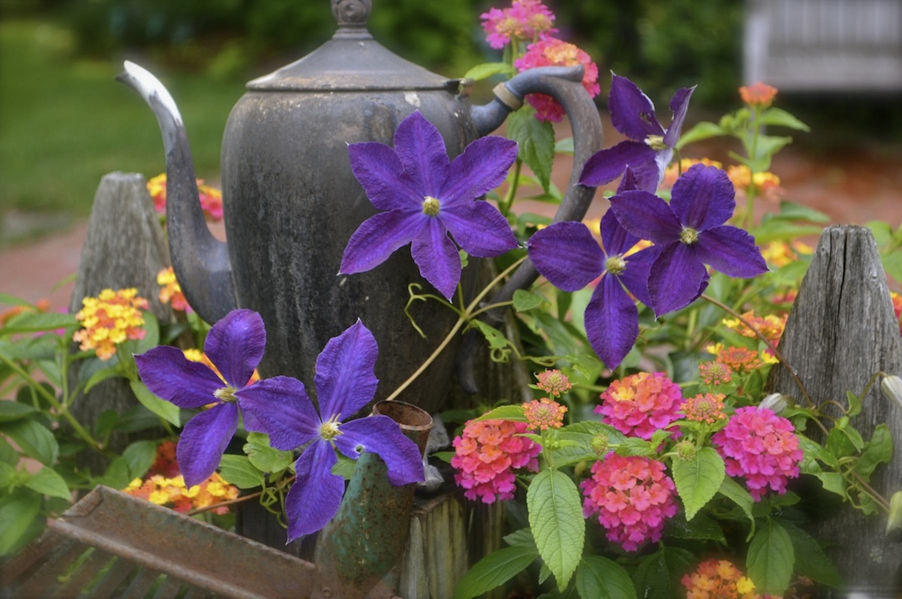 Name Blue Clematis Varieties