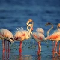 Kumana National Park & Birds Sanctuary