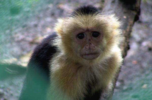 Cute Sad Monkey