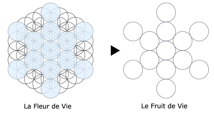 article-fleur-de-vie-fruit-de-Vie
