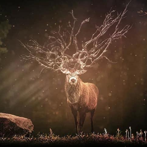 animal-totem-beneficiez-guidance-celeste