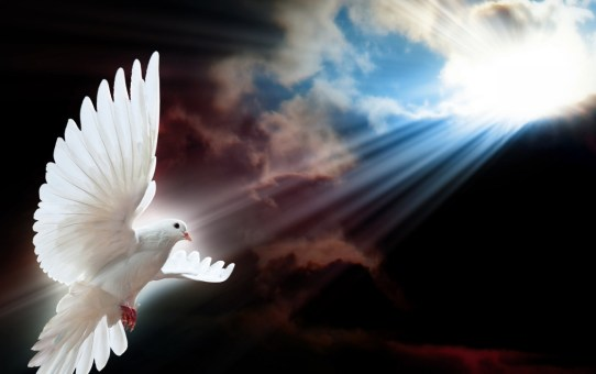 white-dove-wings-1280x720