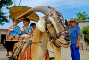CUBA- EL PAPASÁN EN LAS TUNAS