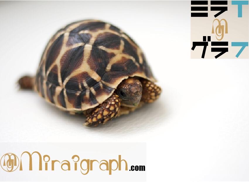 亀は本当に長生き!?6月23日は世界最長寿とされた亀が亡くなった日