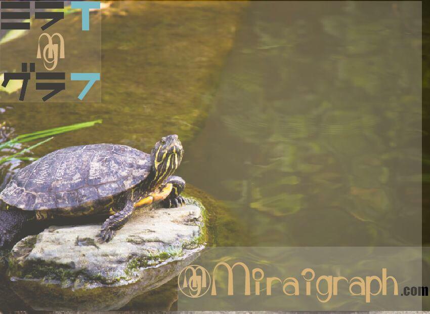 亀は本当に長生きなの!?6月23日は世界最長寿とされた亀が亡くなった日