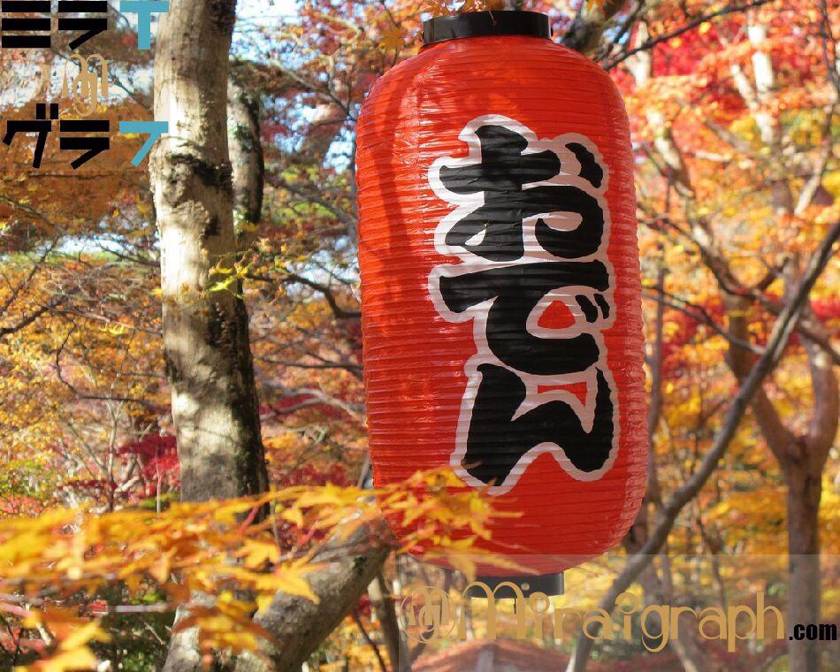 『おでん』ちくわぶは関東だけの具!?ローカル変わり種具材を一挙ご紹介!!10月10日はちくわぶの日