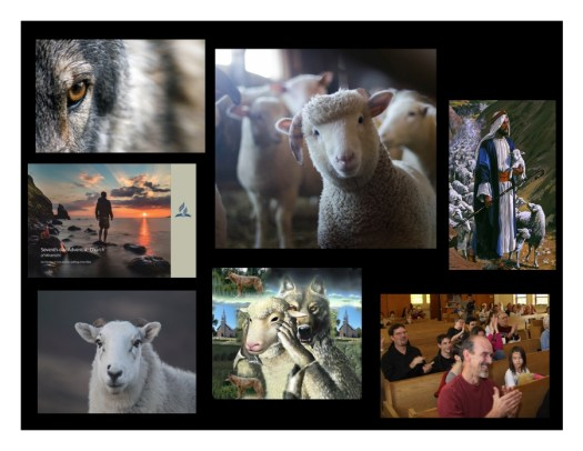 Series of pictures about wolves sheep Jesus and church