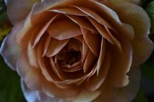 Miranda-Hackett-Flowers-8