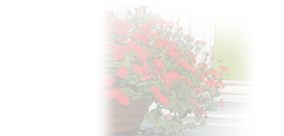 Background image of red flowers