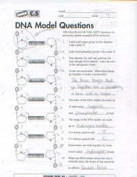 √ Dna The Molecule Of Heredity Worksheet Answers | Dna the ...