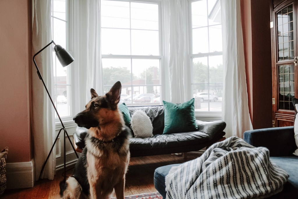 Light Up Your Life (And Home) with Floor Lamps with Porter the German Shepherd | Miranda Schroeder Blog | www.mirandaschroeder.com  #floorlamp #readinglamp #lightfixtures #desklamp #lamp #lamps #brighttech
