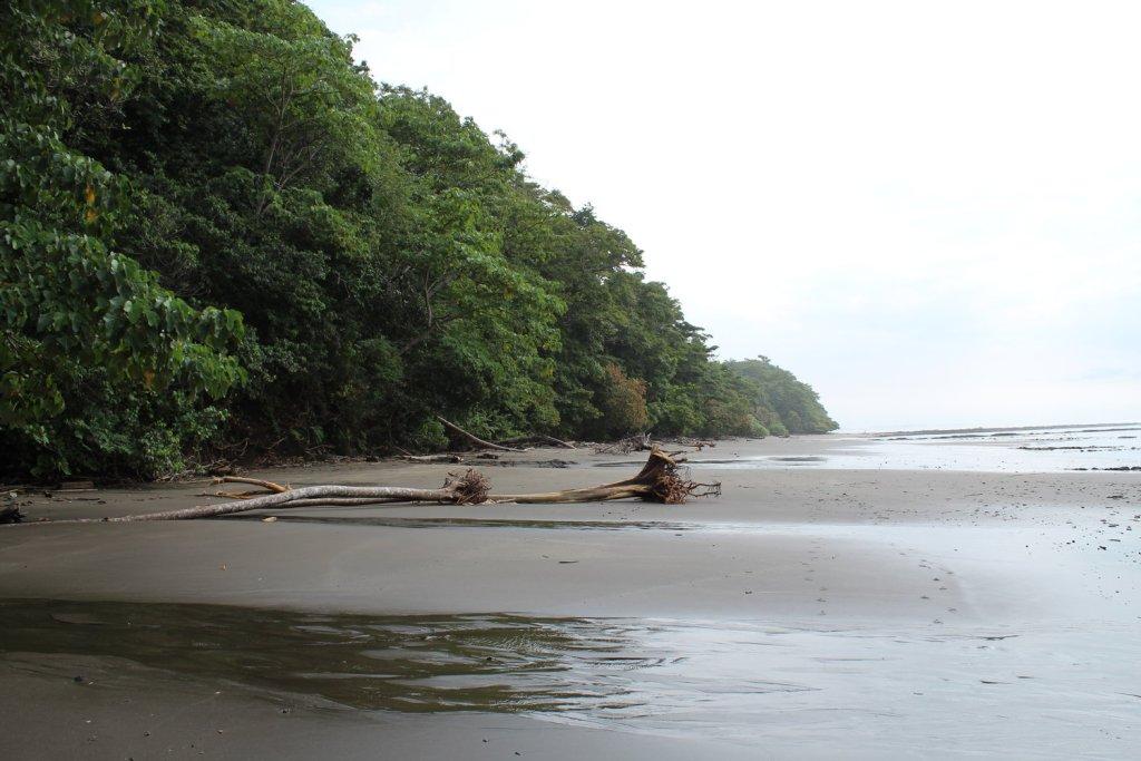 Vacationing in Costa Rica: Everything You Need to Know | Miranda Schroeder Blog  www.mirandaschroeder.com