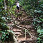 Trail 2 Cameron Highlands
